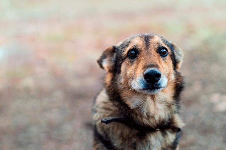Жители Австралии массово забирают животных из приютов
