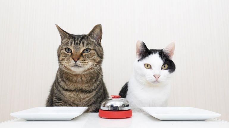 Игры с котами. Веселые видео