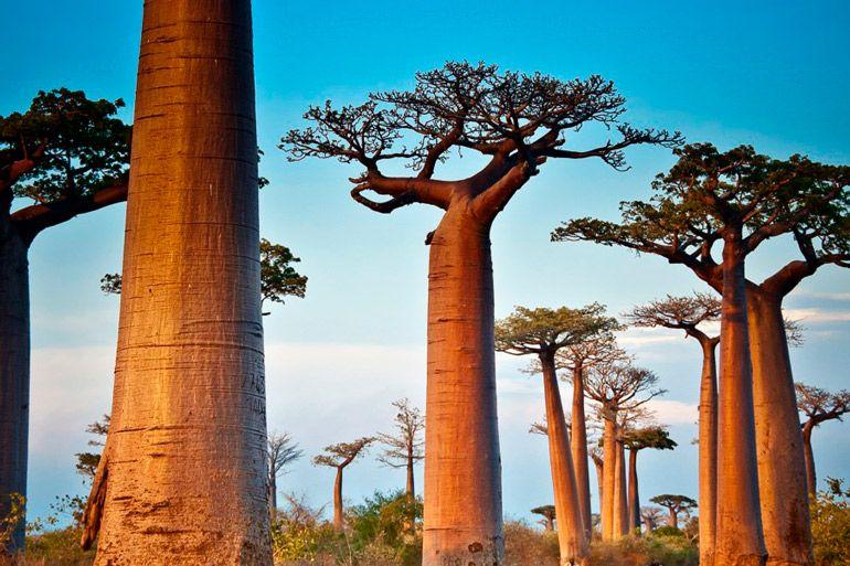 11 впечатляющих фактов о деревьях