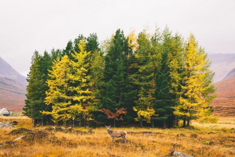 Пейзаж. Обои на рабочий стол. Красивые фото природы