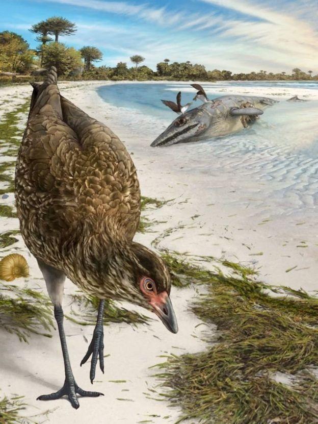Asteriornis maastrichtensis Найдены останки Чудо птицы