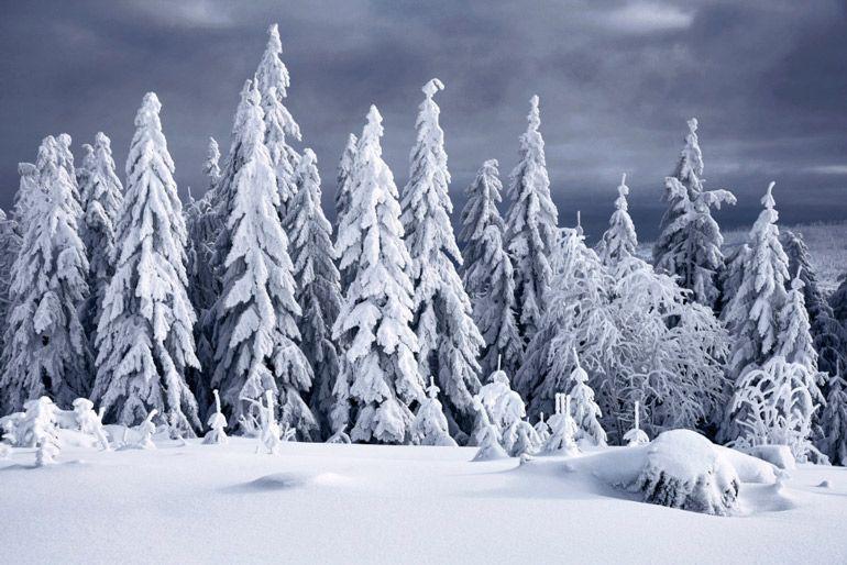 Зима Что почитать сНежная подборка